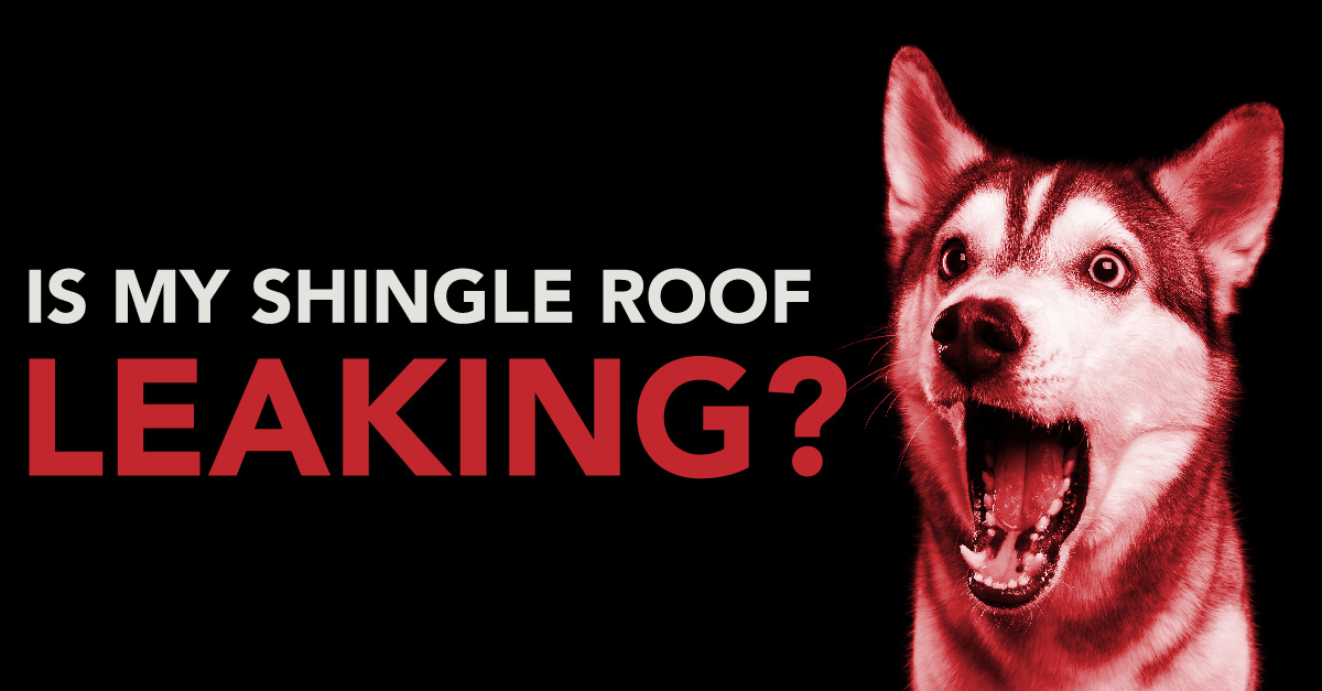 Is my shingle roof leaking?